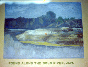 Java man was found along the Solo River in Java